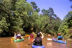 Stock photo of a group of kayakers on the river