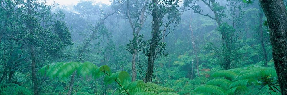 Rainforest, Island of Hawaii<br />