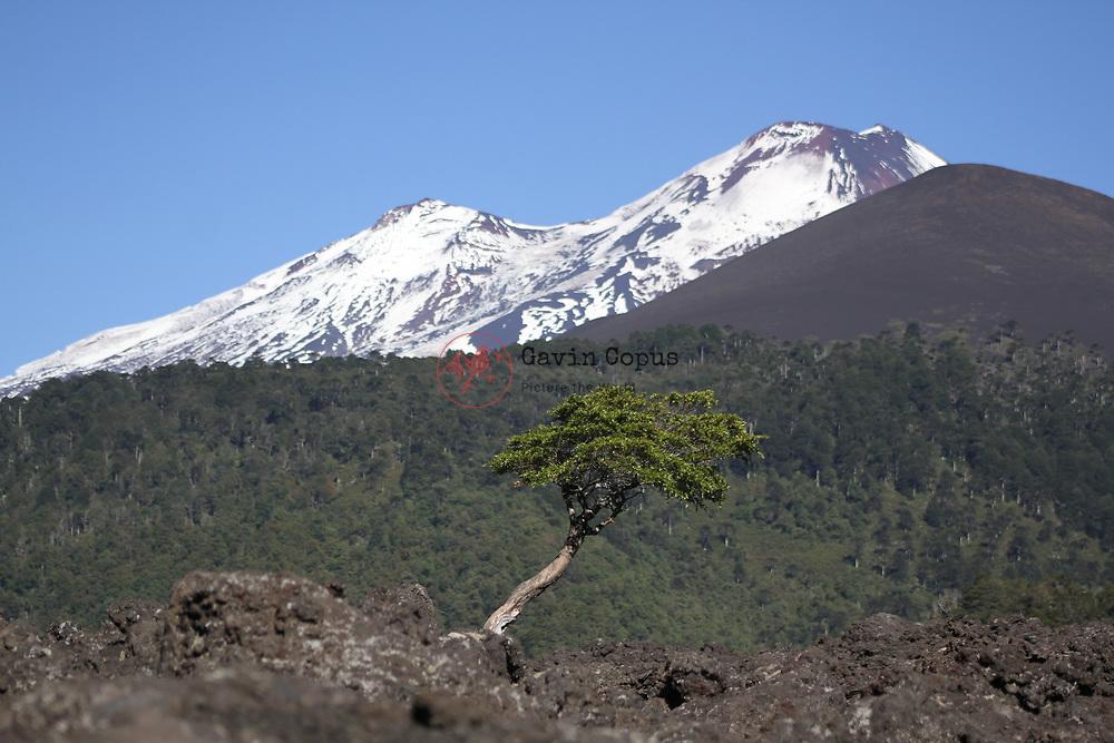 Volcano Llaima, Conguillío National Park, Chile