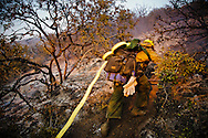 A fire engine crew member hauls lengths of firehose up a steep hill through the brush to bring water to a spot fire that has jumped the fire break. The water is used to cool the fire so that a ground crew can clearcut line around the blaze and cover the embers with dirt.