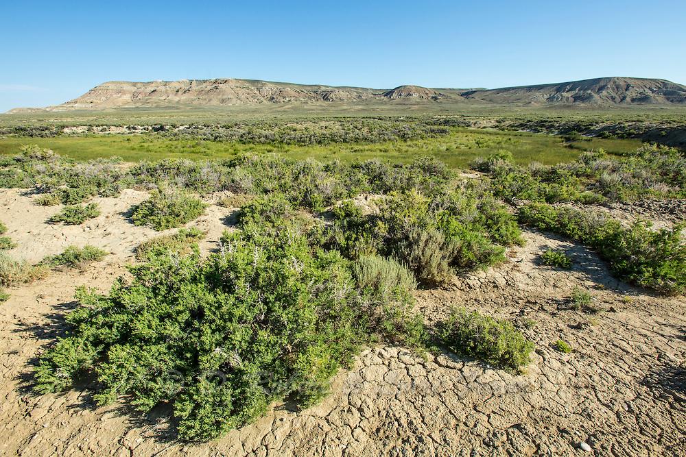 Saltbrush and sagebrush along intermittent stream in the Red Desert of Wyoming