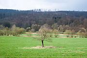 Landschaft mit Obstbaum, winterlich, Vorfrühling, Vogelsber, Hessen, Deutschland