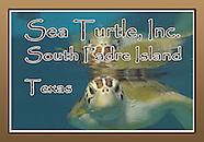 SPI Turtles
