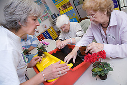 Class leader helping visually impaired woman plant a cyclamen in a Thrive gardening workshop visiting the NRSB,  The use of yellow and red boxes help visually impaired people such as those with macular degeneration,