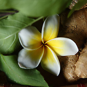 Ginger, herbs and a flower at the Zen Spa in Hanoi, Vietnam.