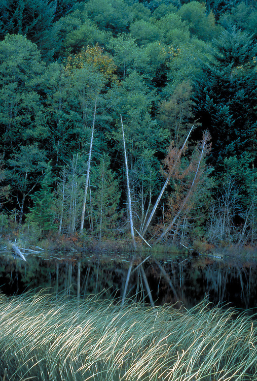 Tall grass and trees along river in Washington State