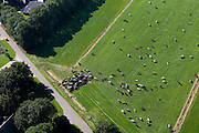 Nederland, Overijssel, Gemeente Nijeveen, 08-09-2009. Koeien verzamelen zich rond drinkbak, in afwachting van de boer.Cows flock together, drinking and waiting for the farmer.toeslag); aerial photo (additional fee required); .foto Siebe Swart / photo Siebe Swart