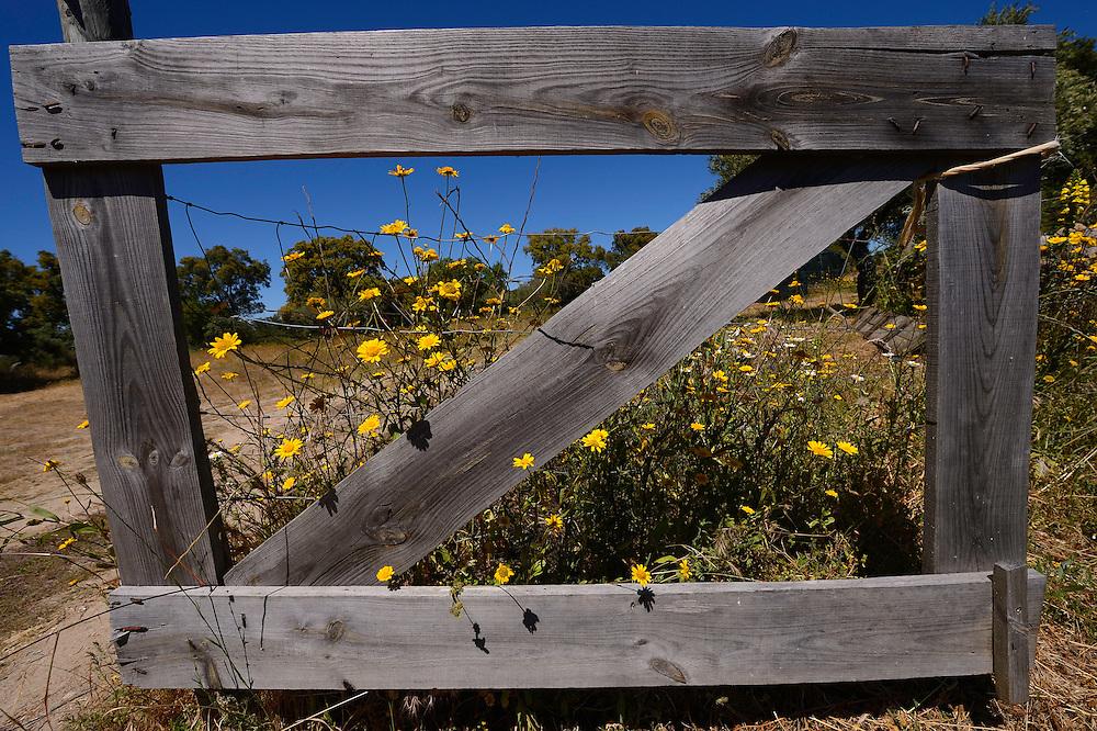 in the Faia Brava reserve, Coa valley, Portugal, Western Iberia rewilding area