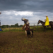 Wyatt Flattery tries to rope the hind legs of a calf during a cattle roundup at the Bar B ranch in Albia, Iowa.  At right is Wyatt's father, Mike Flattery.  They were part of a crew of about a dozen local cowboys hired by ranch owner Catherine Bay for the bi-annual event.  Calves were roped and seperated from the herd for vaccinations, branding and the placement of growth stimulant implants.  The male calves were also castrated.   Bay has a herd of over 2,000 cattle on her southeast Iowa ranch.