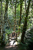 Hikers walk the forested trails of Elk Falls Provincial Park near Campbell River, BC