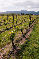 New Zealand, South Island, Marlborough, winery touring and tasting of Cloudy Bay Winery  Sauvignon Blanc and Pinot Noir wine. Photo copyright Lee Foster. Photo #126306