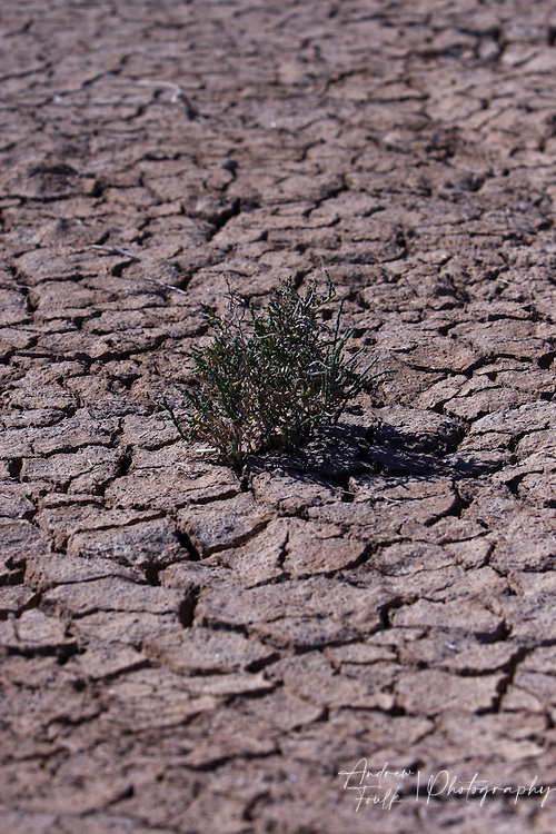 Andrew Foulk/ For High Country News.A lone baby tumble weed grows in the middle of the desert floor near the west side of the Salton Sea.