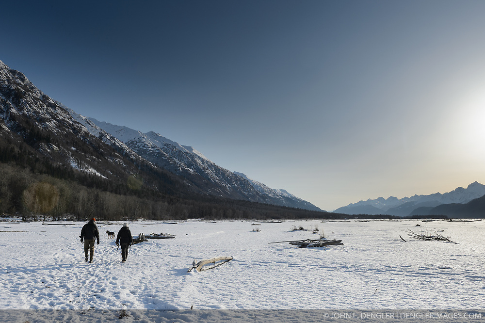 Steve Lewis, Raptor Management Coordinator, U.S. Fish & Wildlife Service (left), and Rachel Wheat, a graduate student at the University of California Santa Cruz, cross the snow-covered gravel bar of the Chilkat River to remove the traps they had set to catch bald eagles. Each morning under darkness they would set their traps. Then in the late afternoon they would remove them. Wheat is conducting a bald eagle migration study of eagles that visit the Chilkat River for her doctoral dissertation. She hopes to learn how closely eagles track salmon availability across time and space. The bald eagles are being tracked using solar-powered GPS satellite transmitters (also known as a PTT - platform transmitter terminal) that attach to the backs of the eagles using a lightweight harness. During late fall, bald eagles congregate along the Chilkat River to feed on salmon. This gathering of bald eagles in the Alaska Chilkat Bald Eagle Preserve is believed to be one of the largest gatherings of bald eagles in the world.