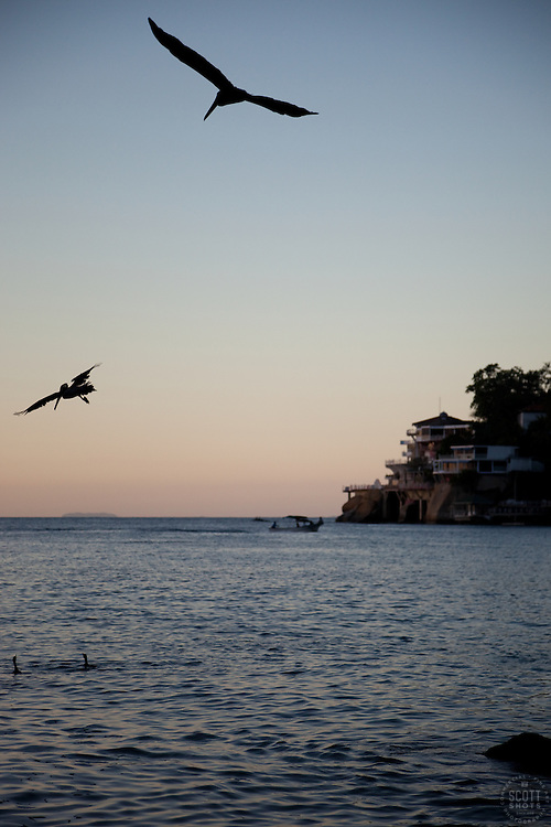 """Pelicans in Puerto Vallarta"" - These dive bombing pelicans were photographed in Puerto Vallarta, Mexico at sunset."