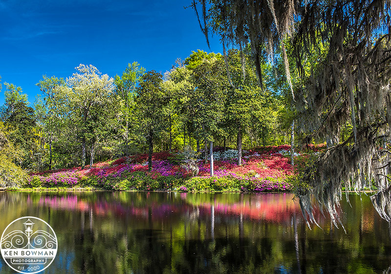 Middleton Place Gardens during Azalas Season.