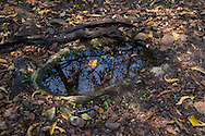 This small watering hole was formerly used by a local poacher to kill or catch wildlife. (Kaeng Krachan, Thailand)