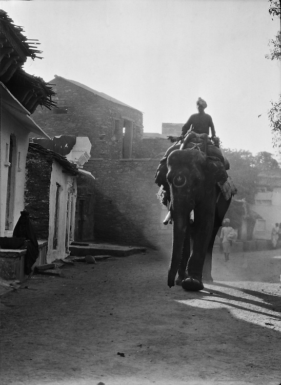 Elephants in the Street, Udaipur, India, 1929
