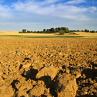 Dry soil and some trees in the Spanish village of Morales del Vino, Zamora province, on July 22, 2001. Photo Rafa RIVAS