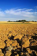 Dry soil and some trees in the Spanish village of Morales del Vino, Zamora province, on July 22, 2001. Photo Rafa RIVAS