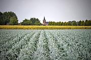 Nederland, Oirlo, 15-9-2017Agrarisch landschap met prei en mais in Noord Limburg. De kerktoren van Oirlo, gemeente Venray, in de verte.Foto: Flip Franssen