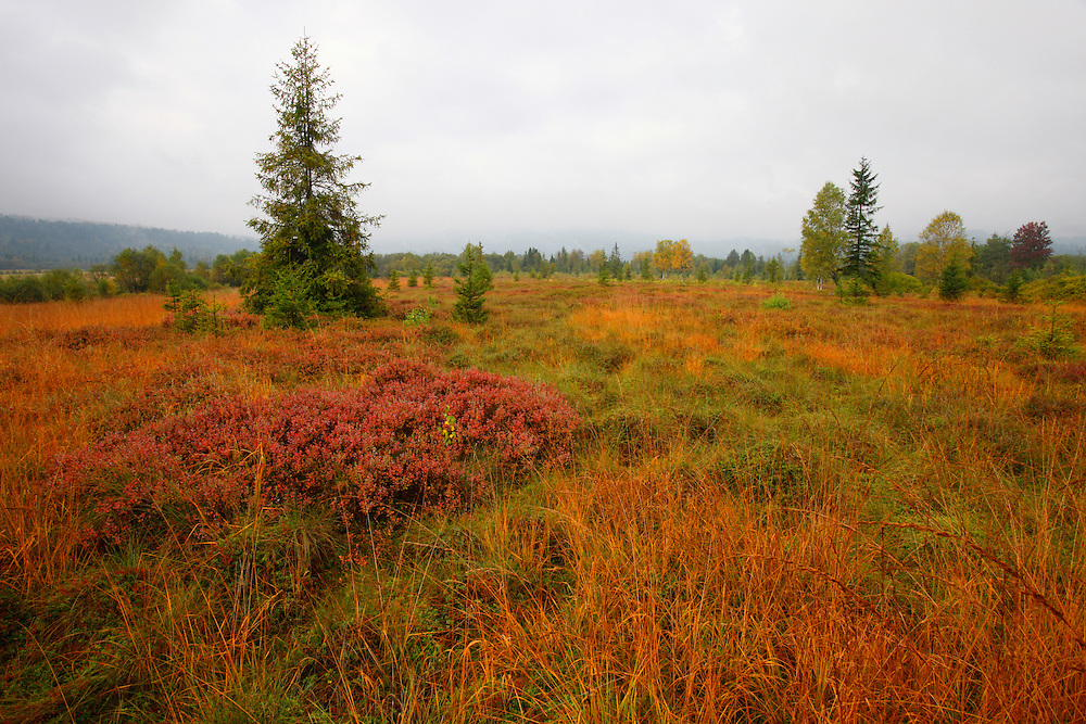Peat bog in Bieszczady National Park, Poland