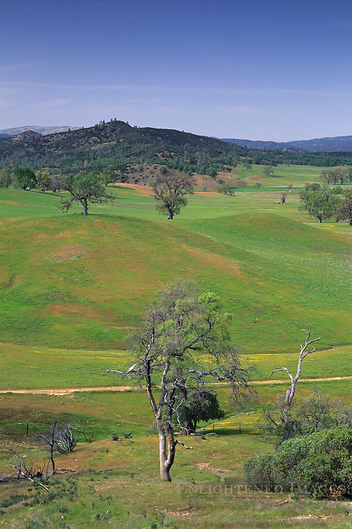 Overlooking Isabel Valley in spring, Santa Clara County, California
