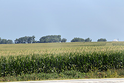 "Corn (maize) tassels out on the 5th of July beating the old ""knee high by the fourth of July"" adage by several weeks."