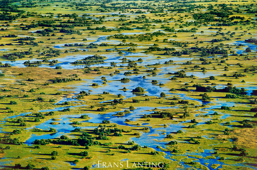Palm islands (aerial), Okavango Delta, Botswana