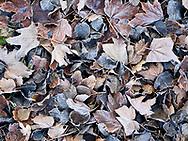 Gevallen bladeren op de grond in het Westduinpark, Den Haag - Fallen leaves on the ground, Westduinpark. The Hague, Netherlands