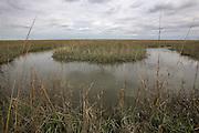 Salt Marsh Creek Bend; NJ, Cumberland Co.,  Egg Island Wildlife Management Area