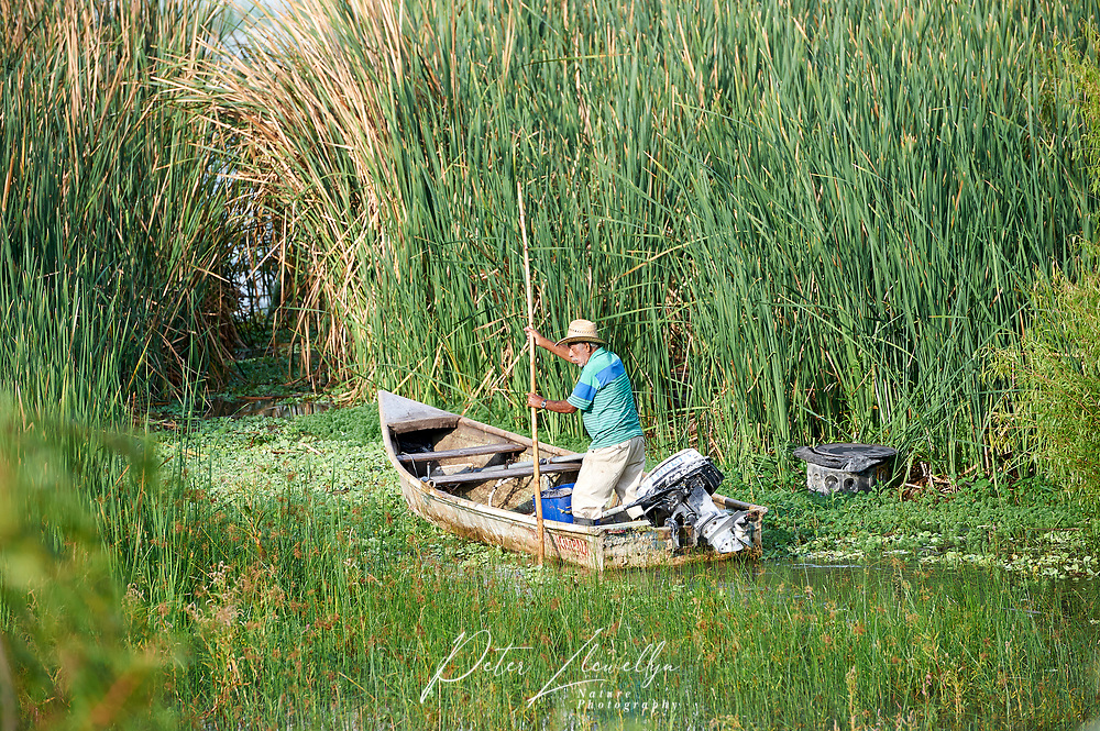 Fisherman sets out for morning catch on Lake Chapala, Ajijic, Jalisco, Mexico.