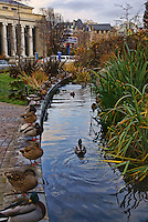 Ducks, Hotel Grand Pacific, Victoria, British Columbia, Canada