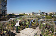Peas & Love urban farm on the roof of Hotel Yooma at Beaugrenelle in the 15th arrondissement of Paris, France. The rooftop garden was planted in spring 2017 and then extended in winter 2017-18, and now contains 250 cultivation plots. The planters use techniques inspired by permaculture with both horizontal and vertical beds, producing organic seasonal fruits and vegetables. Customers rent plots which are tended by community gardeners, and have access to the food grown throughout the year. Picture by Manuel Cohen
