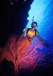 Indonesia..Mergulhadora sobre coral vivo/ Diver over a live coral.Foto:Christiana Carvalho/Argosfoto