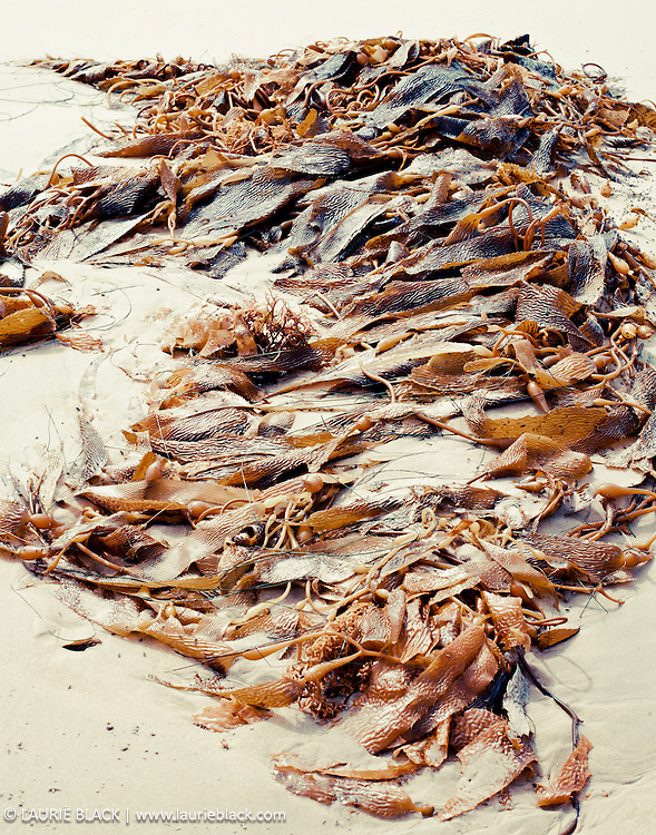 Sea kelp on beach