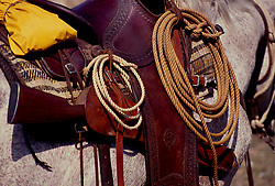 Various ropes hanging from a cowboy's horse saddle