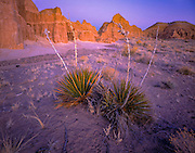 Yucca's thrive in the isolated Cathedral Gorge of southern Nevada.