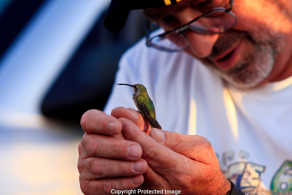 Checking to see if this tiny hummer has any life threatening injuries.