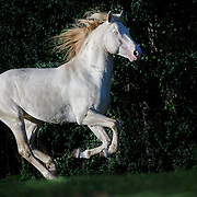 2016 Jericho Creek Horses