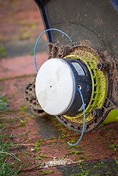 An electric grass edge trimmer