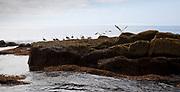 Rocky terrain along the coast of Monhegan Island