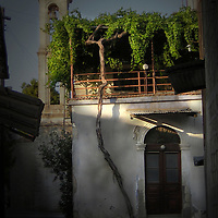 An old grape vine climbing over a balcony in Cyprus