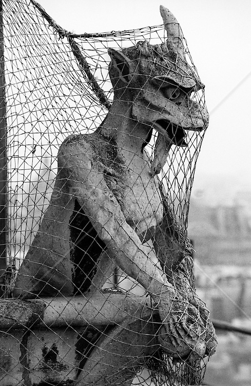 Gargoyle in a net  on top of Notre Dame in Paris