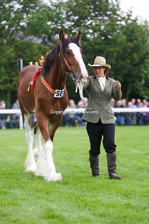 Nathalie Cross and her father's 1 year old bay colt Crossingtons Isaac  Sired by Metheringham Upton Hamlet<br /> <br /> Winner: Filly, Colt or Gelding Yearling