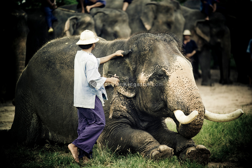 A mahout prepares to give a demonstration of how he climbs on his elephant to tourists in the Pattaya Elephant Village, Thailand.   The village was opened in 1973 as a sanctuary for former working elephants that can no longer be used for extended heavy work due to injury or ill health.  A popular tourist attraction, fee's paid by tourists support the upkeep of the elephants.