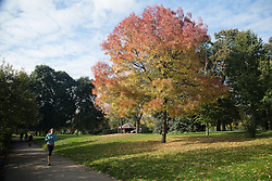 © Licensed to London News Pictures. 30/10/2013. London, UK. A jogger runs past a colourful tree in the autumn sunshine in Victoria Park in East London on 30 October 2013. Photo credit : Vickie Flores/LNP