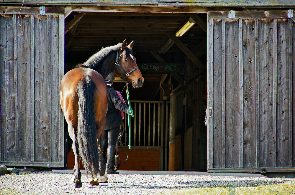 Tacksi walking into the barn at Winter Chill on her first visit for training with Keely Stranahan.
