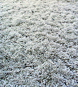 Frost covering grass , England, Winter