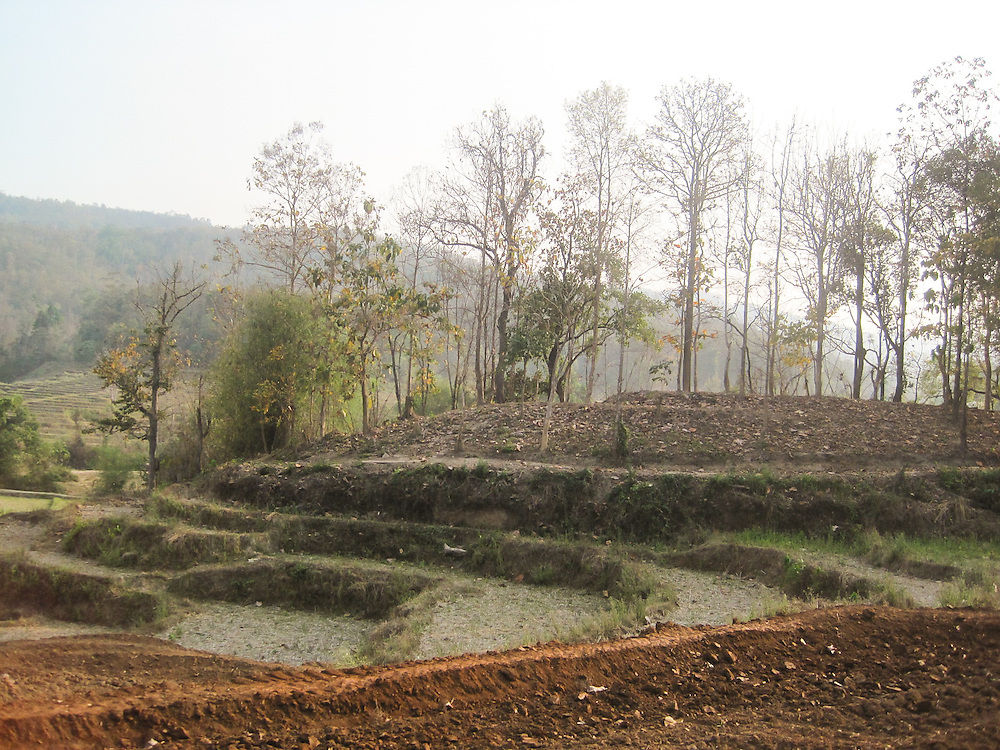 This photograph shows a dirty rice field. But Mida likes the trees in this image.