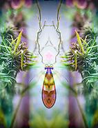 Art with Plant Medicine